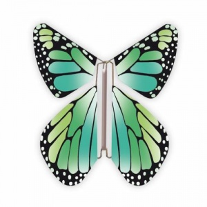 Papillon volant  New Vert