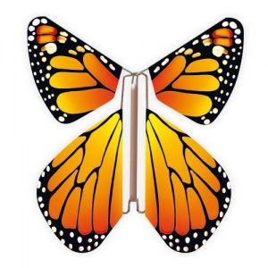 Papillon volant  New orange