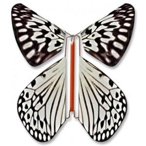 Papillon volant Leuconoe